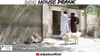 DOG HOUSE PRANK  By Nadir Ali In  P4 Pakao  2018 uploaded on 01-04-2018 336692 views