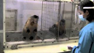 Two Monkeys Were Paid Unequally: Excerpt from Frans de Waal's TED Talk