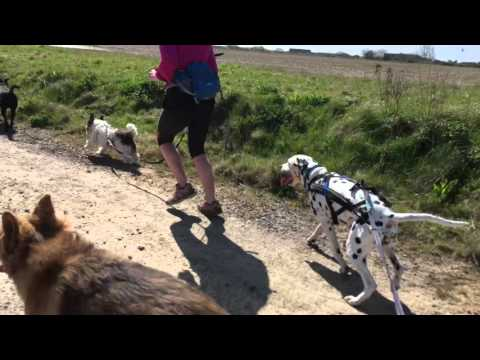 K9 Fitness - Medmerry jog with Lolly, Poppy, Rocky, Rose, Uno and Elsa