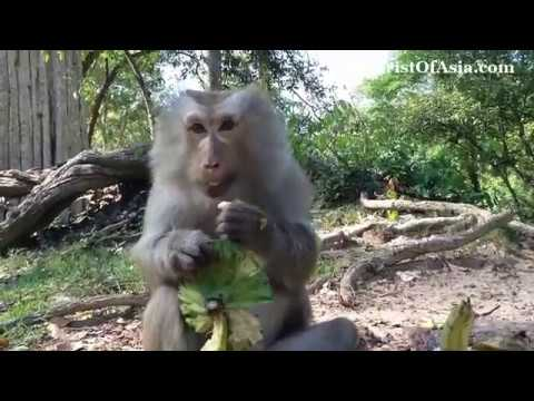 Xxx Mp4 Funny Monkey Play With Other 3gp Sex
