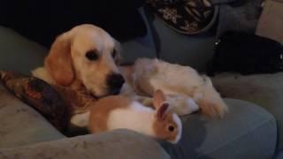 Funny bunny and Filippo