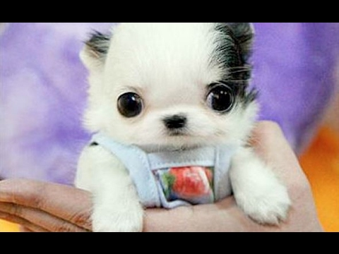 Cute Baby Animal Videos Compilation 2017 BEST OF