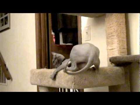 Naked Cat Files #16 - Kitty Rock.mpg