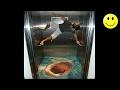Best Of Elevator Pranks | Ultimate Elevator Funny Scare Prank Compilation 2016