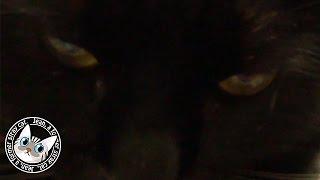 【Jean & Pont 40】ポンちゃんの2ヶ月を振り返る 小さな恋の‥ 元野良猫の保護里親記録 former stray cats.