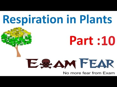 Biology Respiration in Plants part 10 (Krebs cycle: Step 1 to 5) CBSE class 11 XI