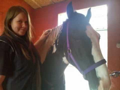 My horse khai xxx