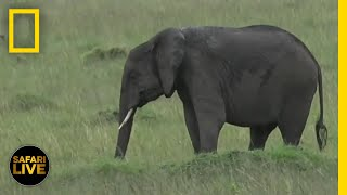 See Elephants at Their Local Watering Hole – Day 55 | Safari Live