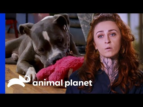 Rescuing Abandoned Dog From An Empty House Pit Bulls & Parolees