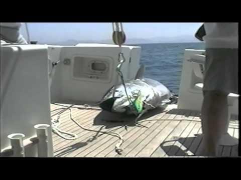 Pesca atún Estrecho Gibraltar yate Austral video 2