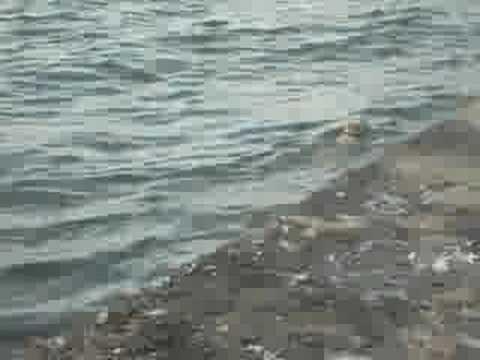 Donla denize giren insan evlatları
