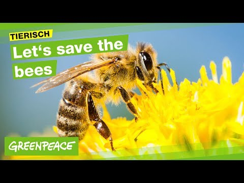 Let s save the bees to bee or not to bee