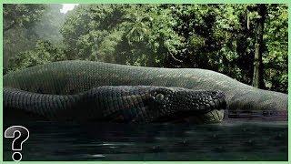 What If The Titanoboa Snake Didn't Go Extinct?