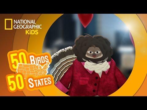 watch Pennsylvania - Feat. Rapper MC Carlton the Ruffed Grouse | 50 BIRDS, 50 STATES