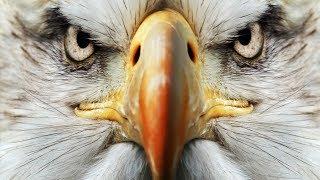 Eagle Eyes Vlog#11 HooplakidzLab