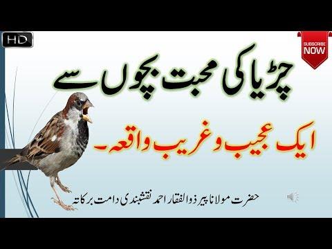Xxx Mp4 Sparrow Love For Children Chirya Ki Kahani By Peer Zulfiqar Naqshbandi 3gp Sex