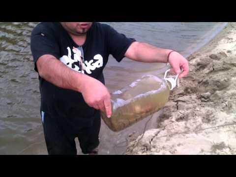 Como sacar carnada viva para pesca
