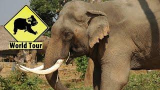 Voyage en Thaïlande Tha Klang Surin village des éléphants Maryse & Dany © Youtube