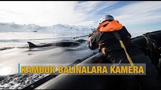 Kambur balinalara kamera