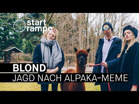 Xxx Mp4 Blond Suchen Das Perfekte Alpaka Meme Startrampe 3gp Sex