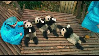 PANDAS - Join :15 (Now Playing)