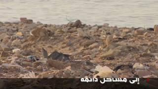 طيور النورس تهدد سلامة الطيران في بيروت