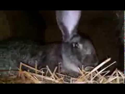 Moja hodowla królików