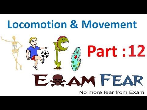 Biology Locomotion & Movement part 12 (Cross bridge cycle) CBSE class 11 XI