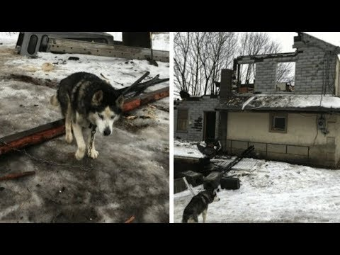 Xxx Mp4 This Dog Was Chained Outside For 15 Years— See What Happened When Rescue Workers Arrived 3gp Sex