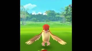Sprite Csapat pokemon go! 5.rész (magyarul) mindig beváll az a hely