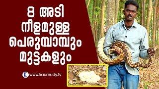 Amazing 8-feet Python and its eggs | Snake Master EP 243 | Kaumudy TV
