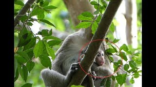 OMG, Alex cry on the tree so loudly, He request a kidnapper let it to mommy