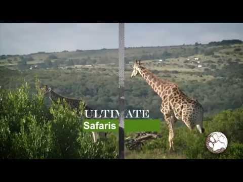Safari Golf Tours - South Africa