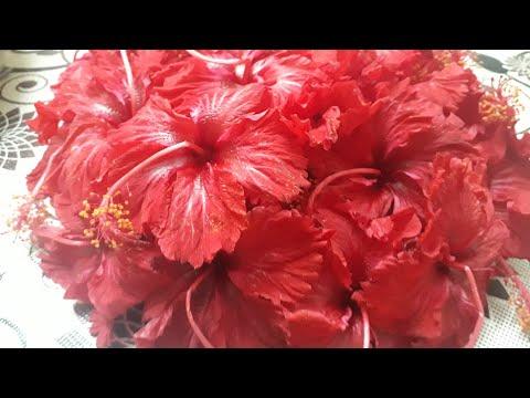 ముడతలు తగ్గించే మందార పూల క్రీం ||  Anti aging Hibiscus Face Cream || Natural Botax