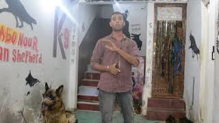 كلام فى الصميم عن الحياه مع الكلاب مع كابتن ابونور 01003035709