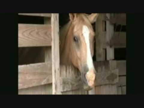 Man rapes a horse