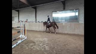 SOLD to USA_*2013 mare by Zavall (Casall) x Douglas (Darco)_small course with rider