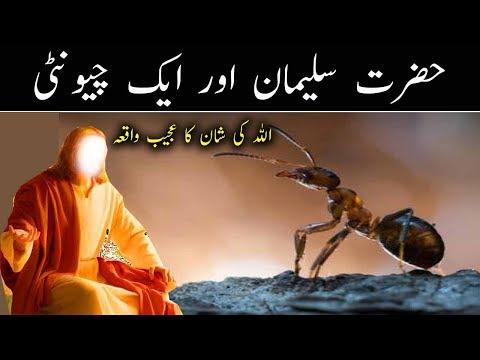 Xxx Mp4 Hazrat Suleman A S Aur Chunti Urdu Islamic Story Heart Toucnihg Letset Vdeo 2018 By Pak Madina 3gp Sex
