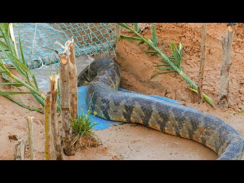 Download Snake Trap Technology - Awesome Big Snake Trap Using Cage Trap