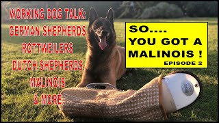 So You Got a Malinois Working Dog Issues - Dog Training Video