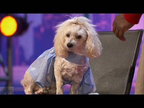 America s Got Talent 2017 WOW Edna & Mia Moore the Counting & Reading Dog Full Audition S12E02