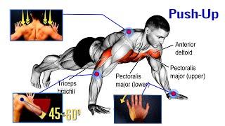 Part-3..প্রথম মাসের জিমের টিউটোরিয়াল( পুশ আপ) Gym of Push up
