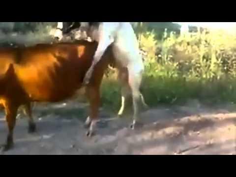 Porno animal Fail