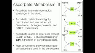 Vitamin C: Metabolism and Function