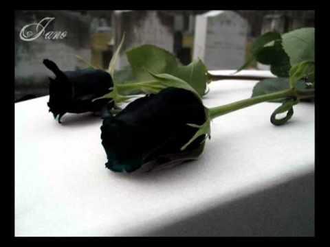 julio jaramillo mis flores negras pasillos de oro