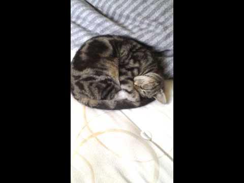 Xxx Mp4 Cutttiiieeee Cat Xxx 3gp Sex