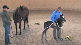 Foal Handling with Monty Roberts