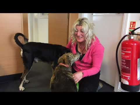 Xxx Mp4 THE REUNION OF MARIA Amp MURPHY IN SCOTLAND 2 Street Dogs I Rescued Whilst Cycling Brazil 3gp Sex