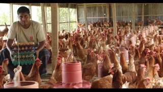 Success Story of Poultry & Fisharies in Bangladesh || সফলতার গল্প