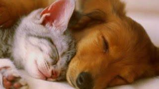 PET THERAPY ♣ Sleep Music w/ Binaural Beats for Dogs & Cats - Sleep Disorders - 2 HOURS